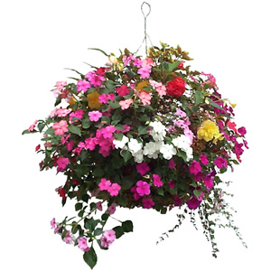 hanging basket for mother's day